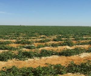 للبيع ارض زراعية بجمعية رجال امن المستقبل